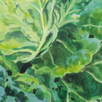 Cabbage Spring Hero by Kate Chitham, artist and graphic designer working in Kent and the south east