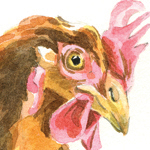 Chicken watercolour by Kate Chitham, artist and graphic designer working in Kent and the south east